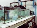 acuarios2
