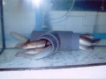 acuarios4